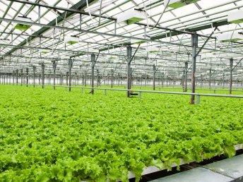 Symbolbild Pflanzenproduktion